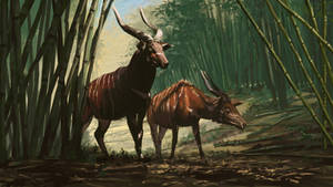 Africa 2 - Mountain bongo