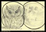 80th Birthday Owl