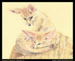Fennec Foxes for =shertso