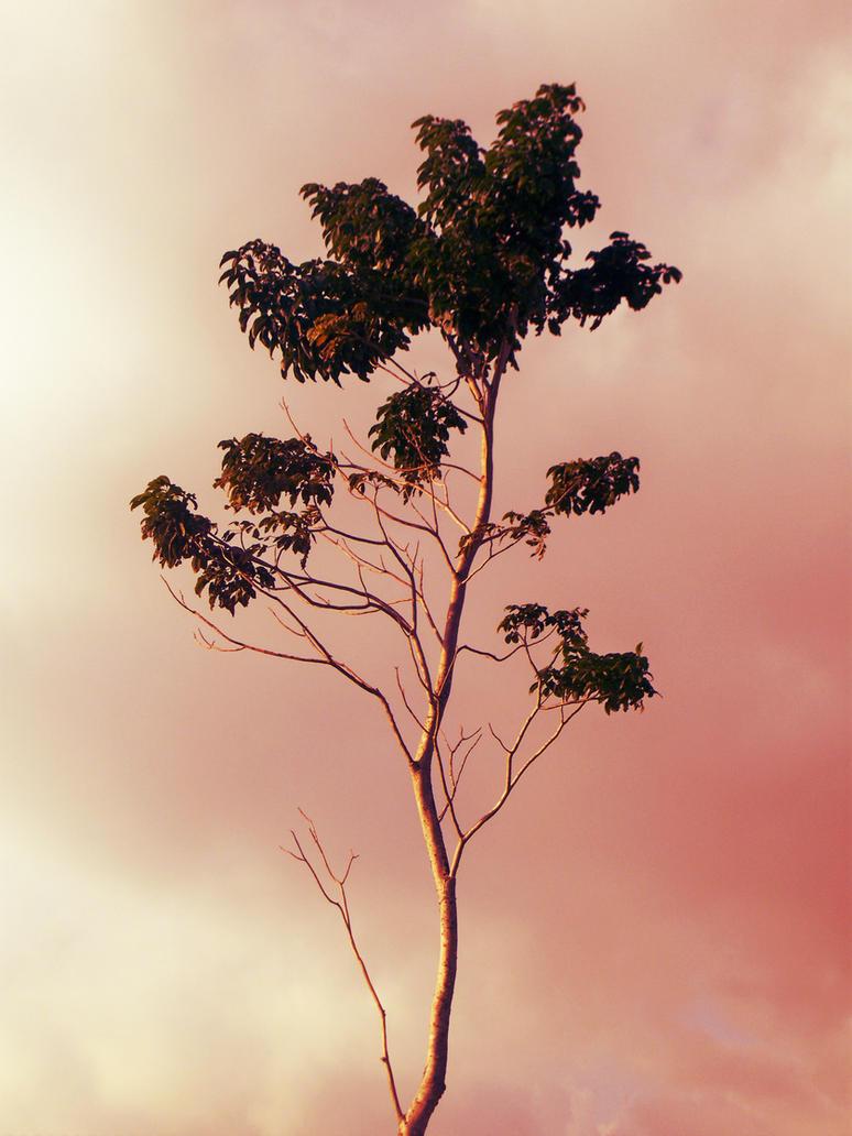 One Tree by CMWVisualArts