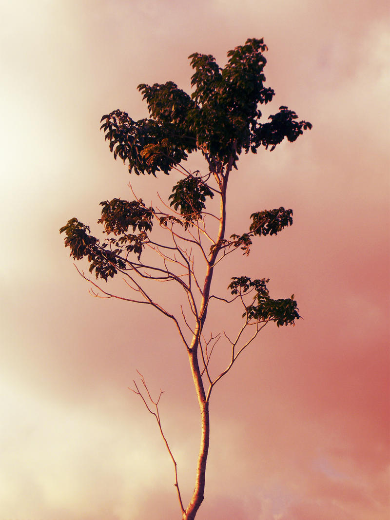 One Tree by CMWVisualArts