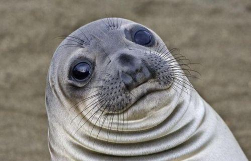 OMG-La foca con mejillas coquetas(?) by MelloHelio