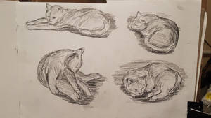 fast sketches of my cat 2