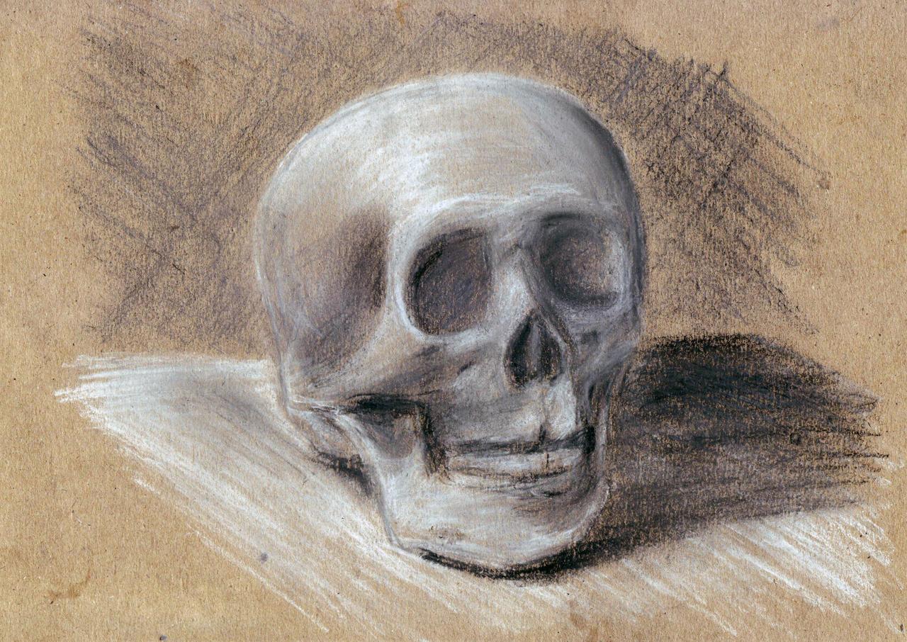 Skull (white chalk, dry pastel)