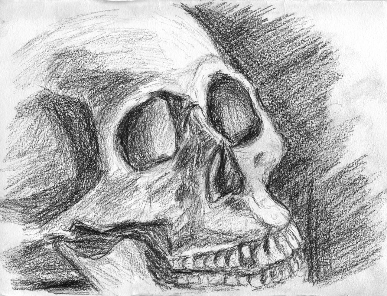 skull sketch (black pencil)