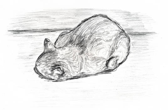 sleeping cat pencil sketch 2