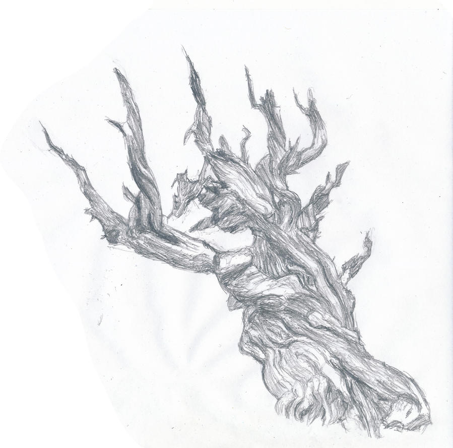 Bristlecone Pine By Screffy On Deviantart