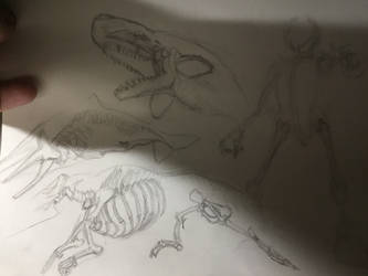 Skeletal sketches for anthropormorphic whale by diphycue