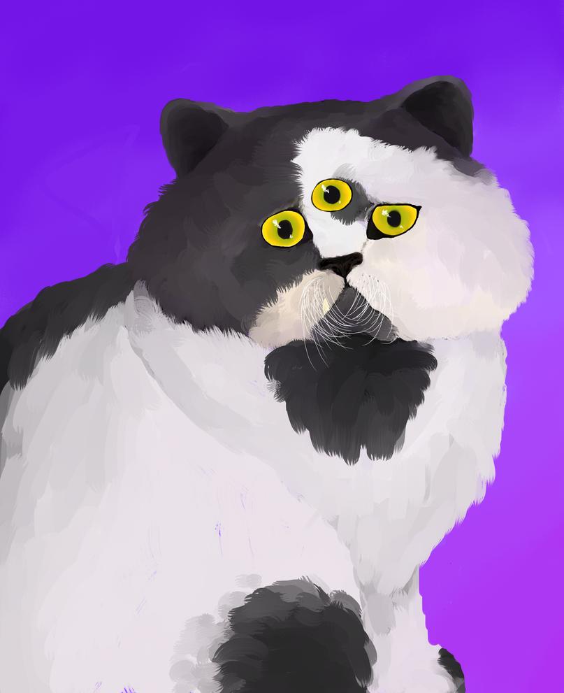 Weird cat by Sabhira