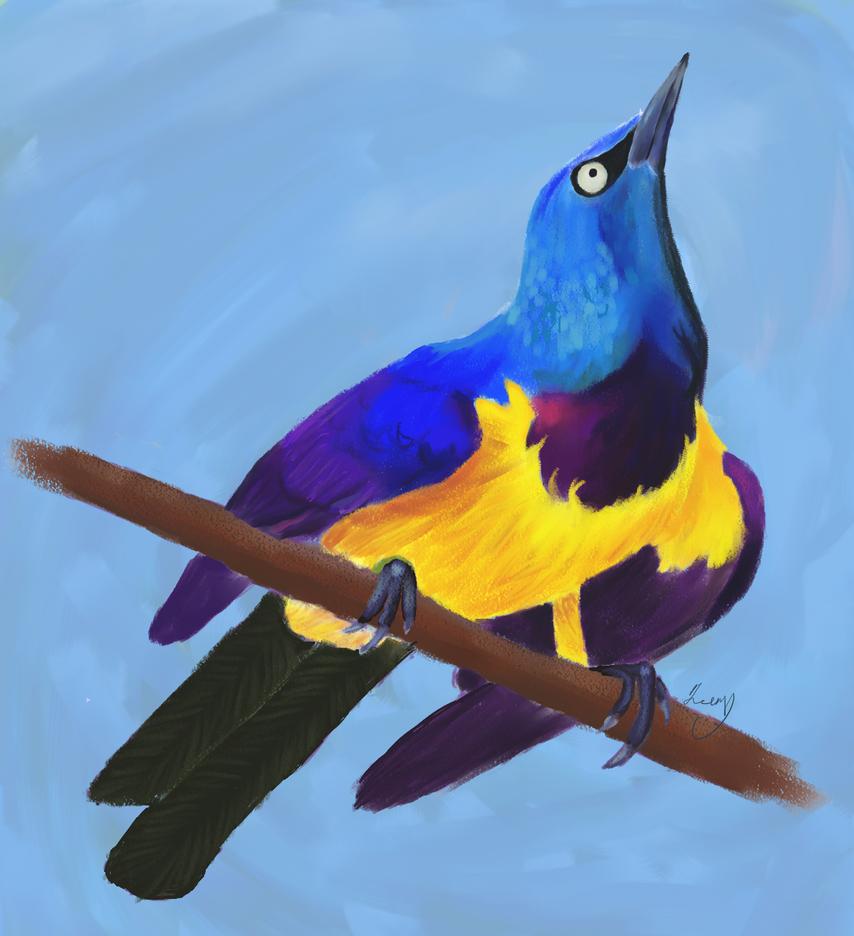 Royal Starling study by Sabhira