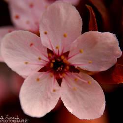 Spring by Kaloszek