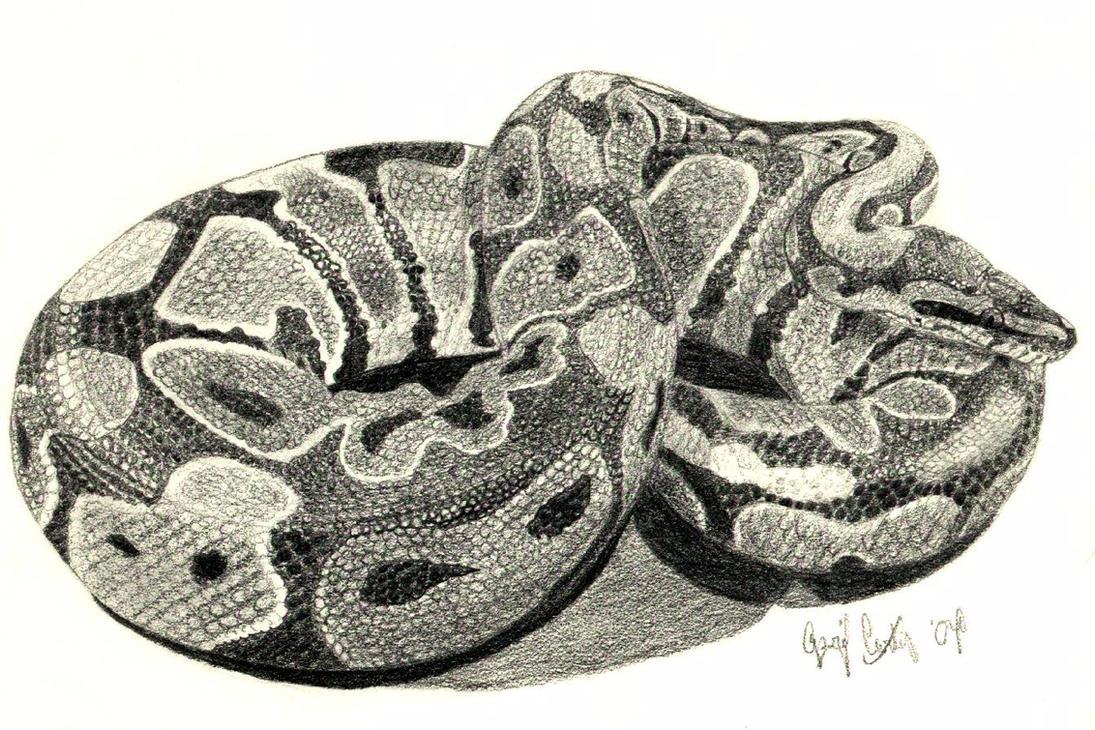 Python drawing - photo#9