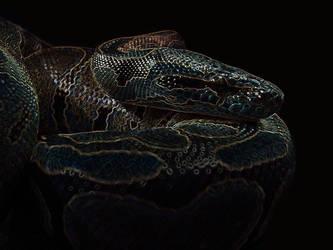Ball Python - glow by Cerulean-Serpent