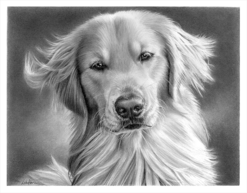 Portrait of Dakota by imaginee