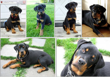My puppy Zahara then and now by imaginee