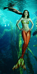 Mermaid Simona has an admirer by sirenabonita