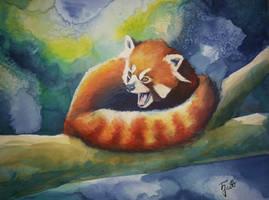Red Panda 3 by ZiskaJa