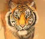 Tiger (prismacolor) (3) by ZiskaJa
