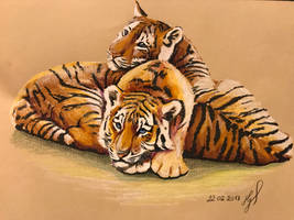 Tigercubs by ZiskaJa