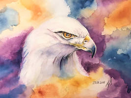 White Eagle by ZiskaJa