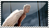 Angel -Warren worthington III- by DracosDerpyHoof
