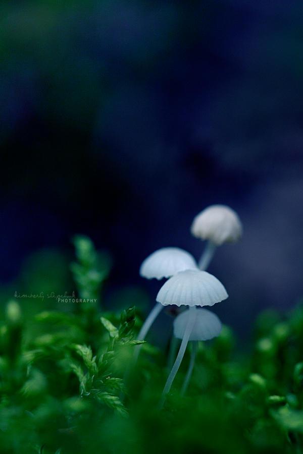 . Ghosts . by KimberleePhotography