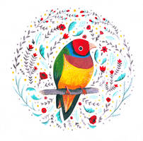 Gouldian Finch by Parchmiss