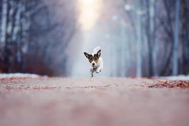 Jack Russell Terrier Zeiss. Yoshkar-Ola, Russia. by AnnaTyurina