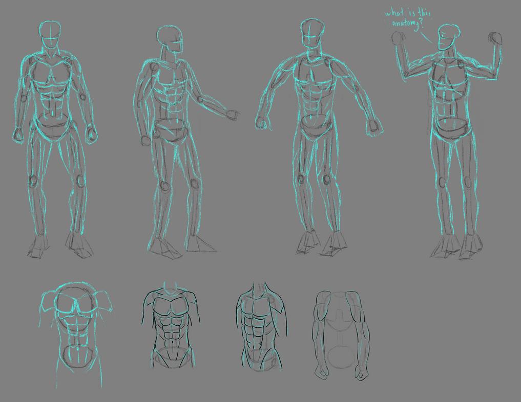 anatomy practice - male body by antiderivativebanana