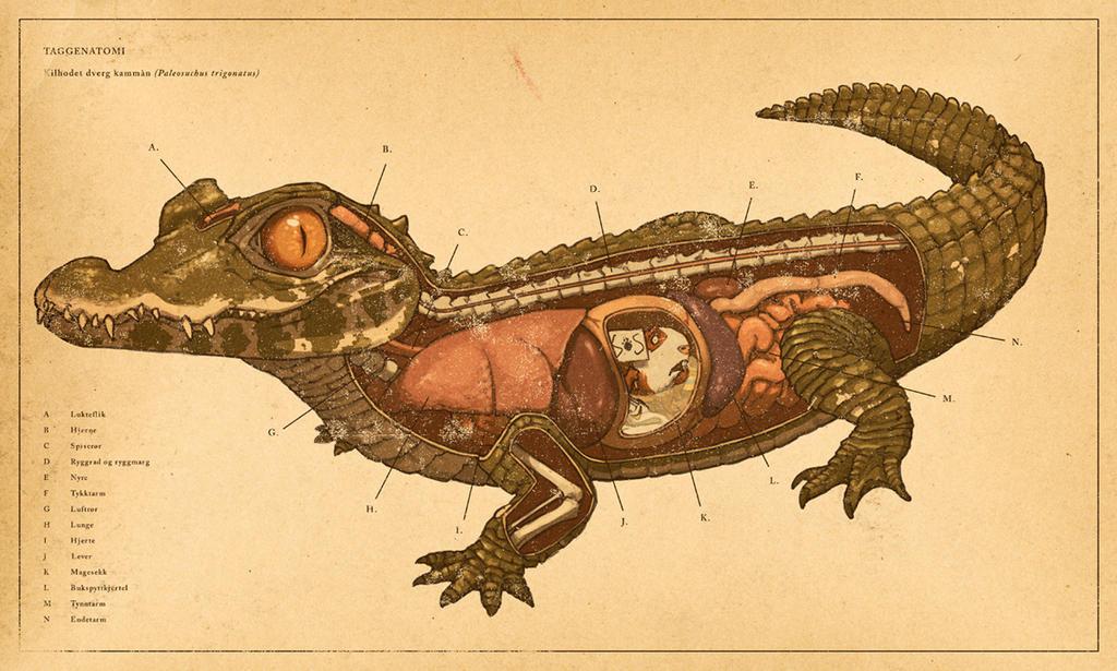 Anatomy of a crocodile
