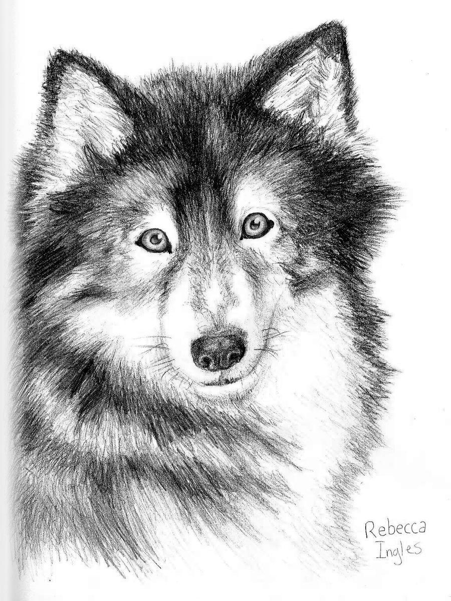 Realistic Wolf Portrait by bingles