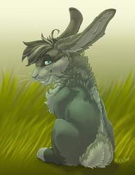 Racabbit