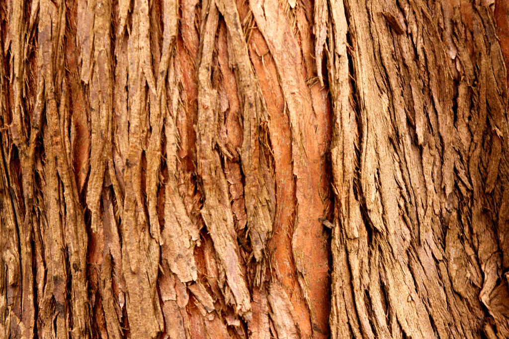 Bark pictures