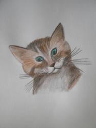 Cat by GiraffeAndy