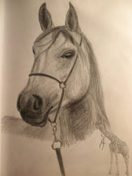 Horse Portrait by GiraffeAndy