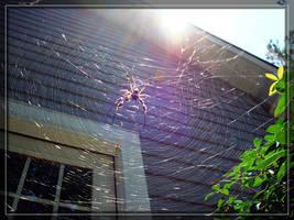 Golden Silk Orb-Weaver pt. 2 by ExplodedSoda