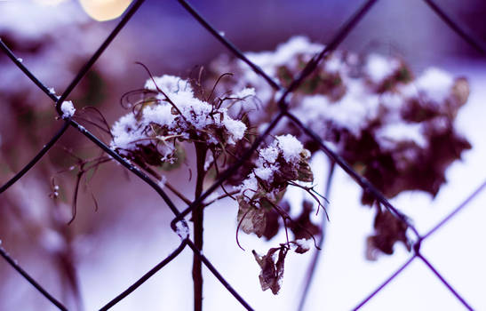 Flower's suffering.