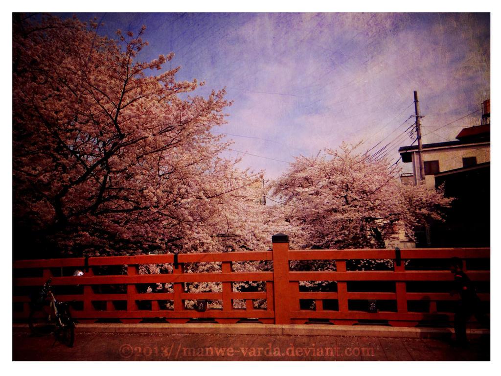 Sakura by Manwe-Varda