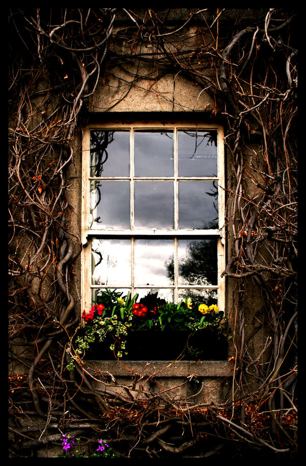 Prozori koji govore - Page 2 Vine_Window_by_TheShelledOne