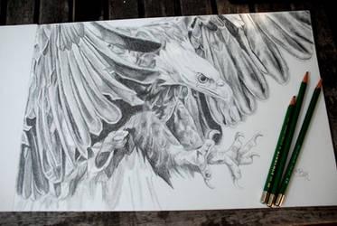 Eagle by kestraelflight
