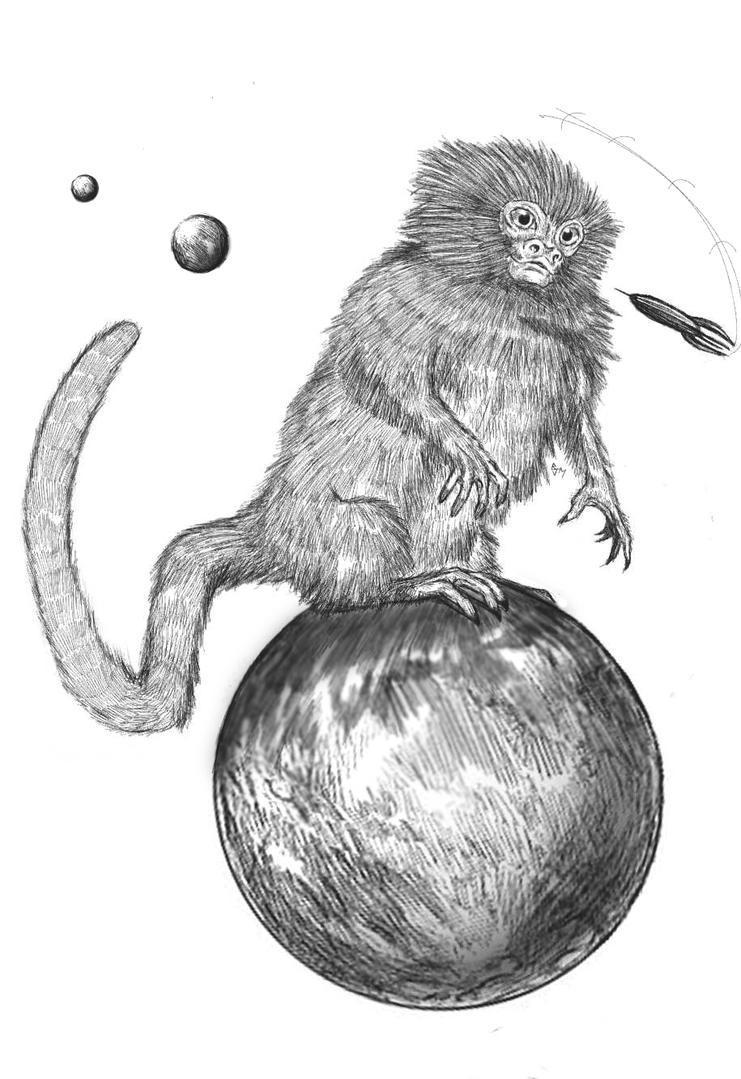 pygmy marmoset coloring pages - photo#31
