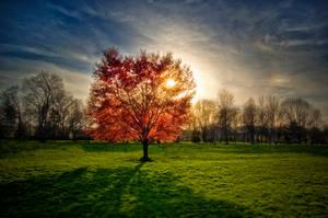 Days Of Wonder by JustinDeRosa