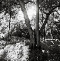 This Light, Everlasting by JustinDeRosa