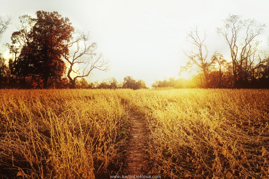 The Path To My Heart by JustinDeRosa