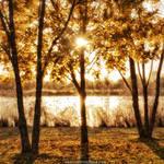 Autumn's Treasure