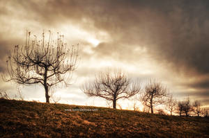 Wasteland Of Hearts by JustinDeRosa