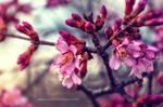 Spring Has Returned by JustinDeRosa