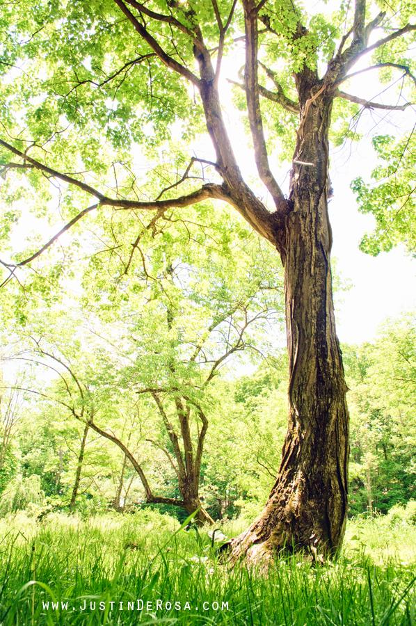 Tree Of Life by JustinDeRosa