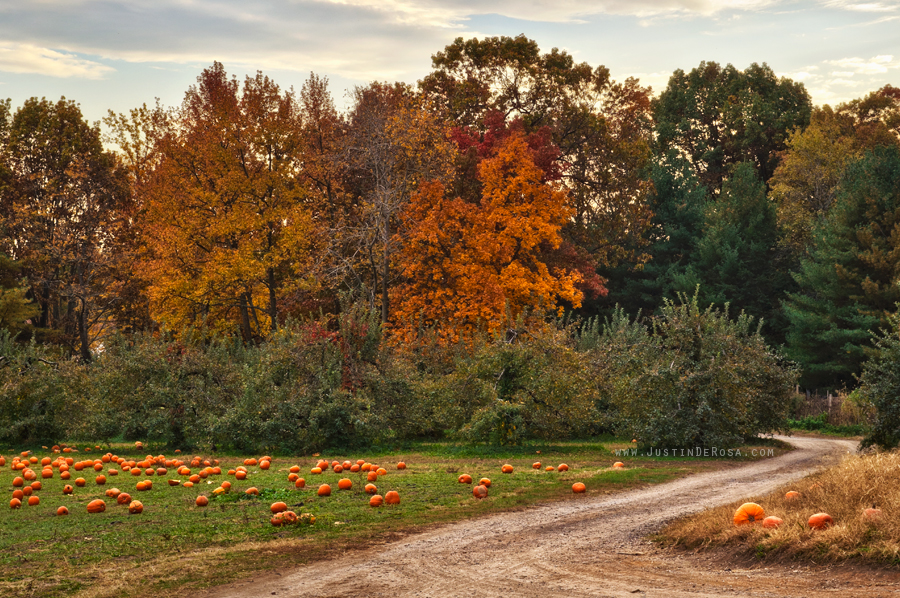 Pumpkin Wasteland by JustinDeRosa