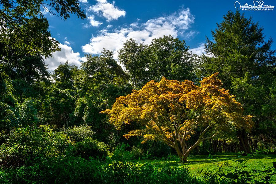 Autumn's Return by JustinDeRosa